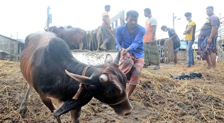 চট্টগ্রামে ৭১ হাজার গরু বিক্রি